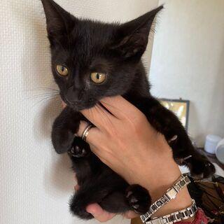 3.小さな声で甘えてくる黒猫くん
