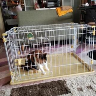犬、猫 ゲージ(中古、使用感有り)の画像