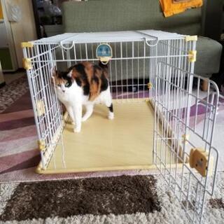 犬、猫 ゲージ(中古、使用感有り) - 家具