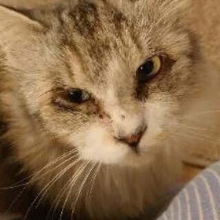 猫 2歳半 オス 去勢済み ワクチン済み