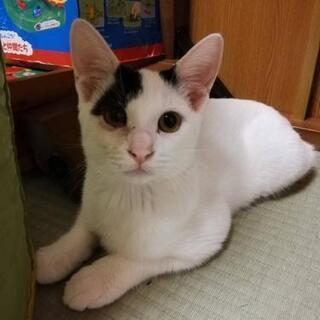 里親さん募集🐈 - 猫