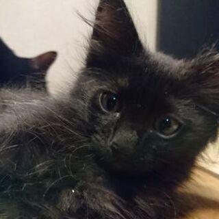 黒猫ちゃん2ヶ月