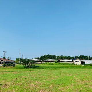 松阪まるよし玉城牧場での松阪牛の肥育管理 正社員募集
