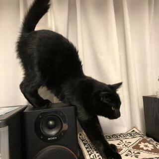人が大好きな黒猫 - 猫