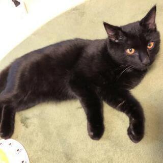 人が大好きな黒猫 − 東京都