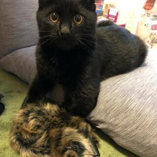 人が大好きな黒猫の画像