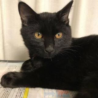 人が大好きな黒猫 - 里親募集