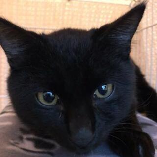 人が大好きな黒猫 - 福生市