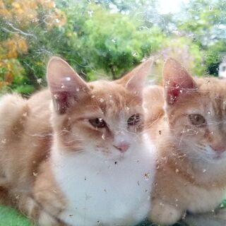 仲良し猫ちゃん姉妹