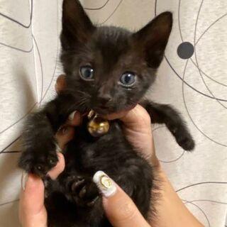 子猫(♀)生後1か月 里親募集中 可愛がって下さい