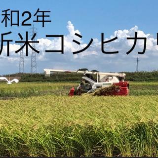 2020年9月収穫 新米コシヒカリ 玄米 30kg