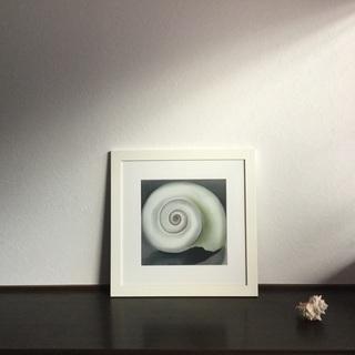 ジョージア・オキーフ 貝殻 Shell No.1 1928 額装 ポスター - 売ります・あげます