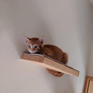 トライアル決定いたしました(^^) - 猫