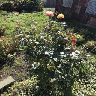 庭の草花2