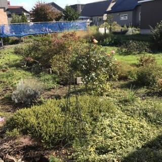 庭の草花2 - 家具