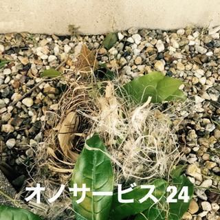 鳩の巣駆除、ヘビ、コウモリ、ゴキブリ、名古屋市、愛知県全域