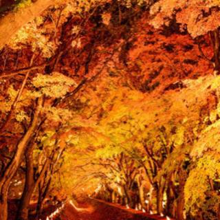 【急募‼︎ 11/23(月)】富士河口湖 紅葉祭り
