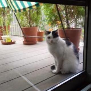 庭にあらわれた控えめなはちわれさん