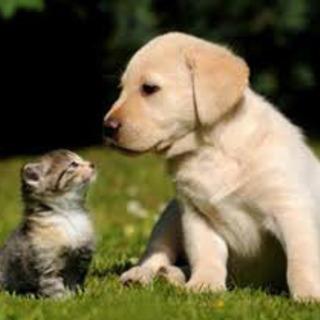 犬猫の保護やお世話などのボランティア 立ち上げ