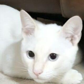 10月25(日)で募集終了☆家族を見つけてあげたい白猫君