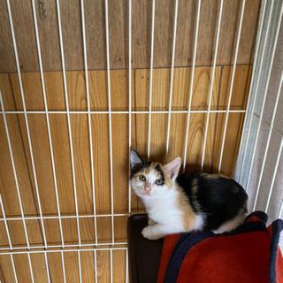 2ヶ月のメス猫ちゃん 里親様決まりました。