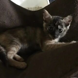 大人の猫さん大好きアミちゃん♥の画像