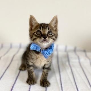 可愛い兄弟 - 猫