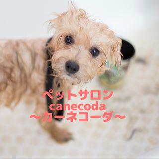 【宇都宮市内無料送迎】小型犬限定トリミング!プードル 6000円〜