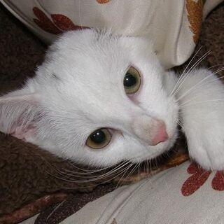 山に捨てられていたメスの白猫です。