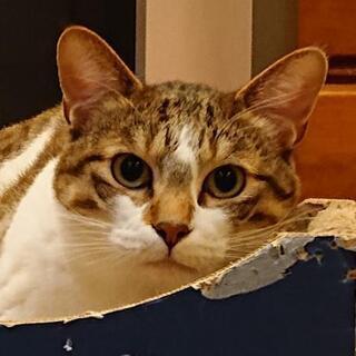 どんな猫とも仲良し、お調子者のコメくん♪