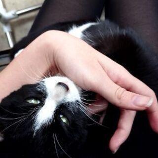 【手術等費用折半可】野良 1歳未満 白黒模様の仔猫
