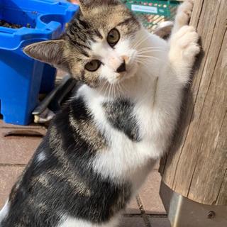 里親さん募集!4匹の4ヶ月仔猫達