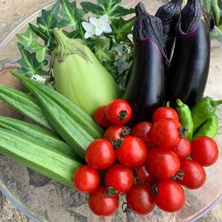 お野菜10種類!秋野菜、根菜など(2)オマケ付きです
