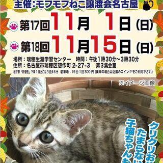 11/15(日) 猫の譲渡会 in 名古屋市瑞穂生涯学習センター