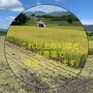 新米 キヌヒカリ 30キロ 9000円