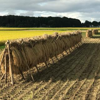 自然乾燥 はぜがけ もち米(こがねもち)新米 令和2年度30kg...
