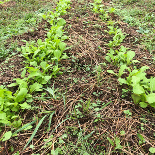 野菜栽培セミナー 無農薬 無肥料 不耕起