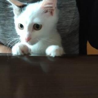 小柄な可愛い男の子 - 猫