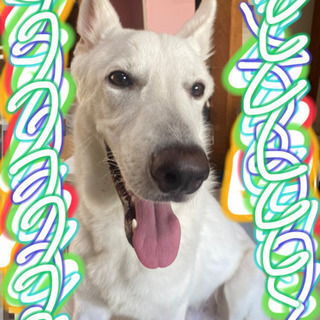 犬 ジモティー