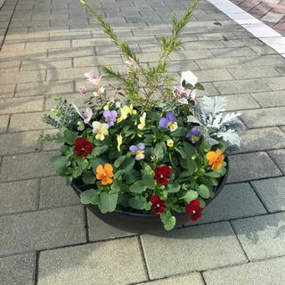 季節の寄せ植え2500円から作ります!