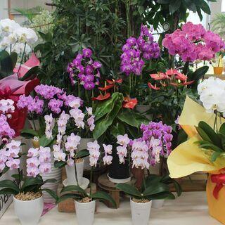 茨城県 筑西市  (有)花仙 バイト歓迎募集中!お花が好き…
