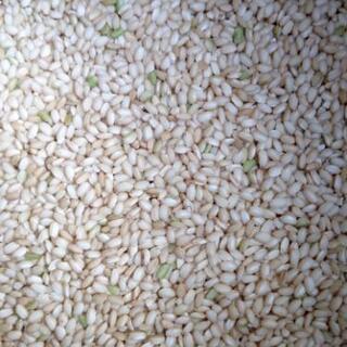 有機肥料栽培のもち米1キロ 餅米玄米 品種ミヤタマモチ