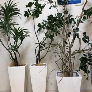 白の大型植木鉢 3つセット