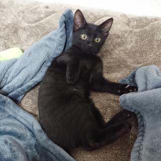 生後約3か月イケメン黒猫のハンディーキャップ持ちの唯一無二の存在...