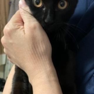 キジトラ♀黒猫♀
