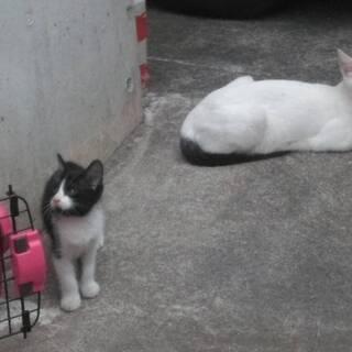 仔猫4匹! 白黒 野良猫一家 里親募集です。
