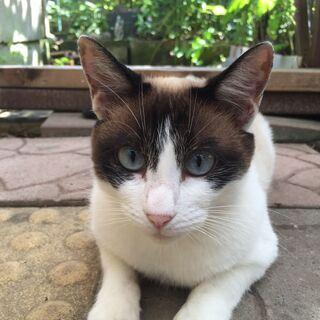 猫に理解のある方で大切に育ててくださる方