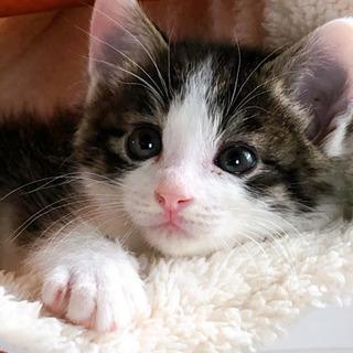 とにかく可愛い子猫生後1ヶ月
