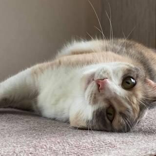 保護猫・にゃんこ ゆるやか譲渡会in神戸 - 神戸市