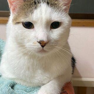 保護猫・にゃんこ ゆるやか譲渡会in神戸 − 兵庫県